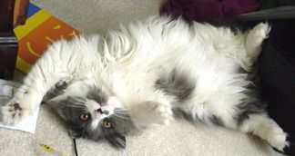 LucyFur saying...... Ohhhh Scratch my belly please!