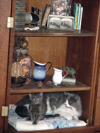Smokey and Lucy found a place in the Armoire.