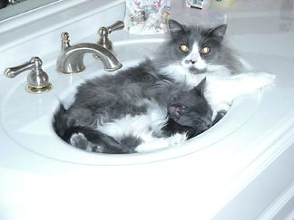 Lucy and Smokey in the sink