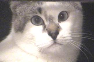 Chessie - our cross-eyed cat looking in the window