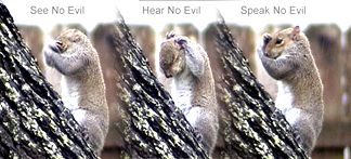 This squirril was in our backyard wiping his face while it was raining... Turned out a pretty good set of pictures