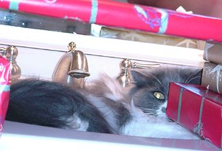 LucyFur finds a quite spot in the sink under the presents while Santa works