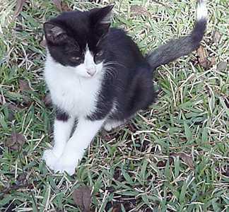 Black kitty (tippy) in back yard