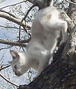 White kitty in a tree