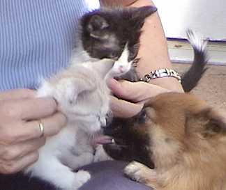 Betsy kissing Chesie