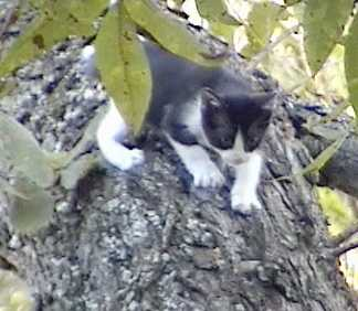 Black Kitty in a Tree in our back yard