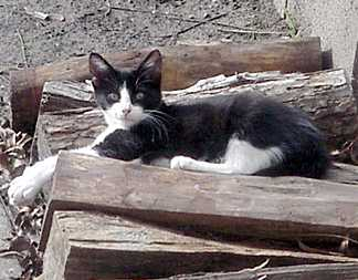 Black kitty caught taking a cat nap on the wood pile