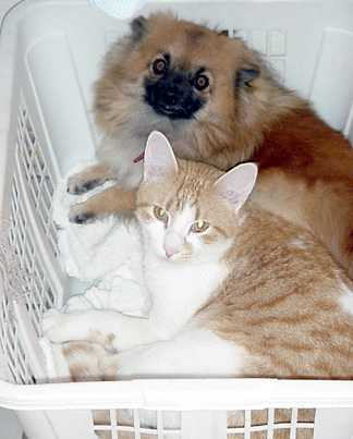 Orange Kitty and Betsy sleeping in a basket in the laundry room