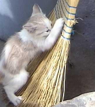 Chesie cat